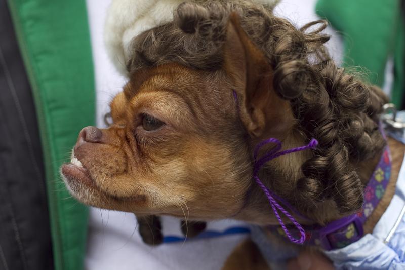 IMG_5247 beautydogwebcopy